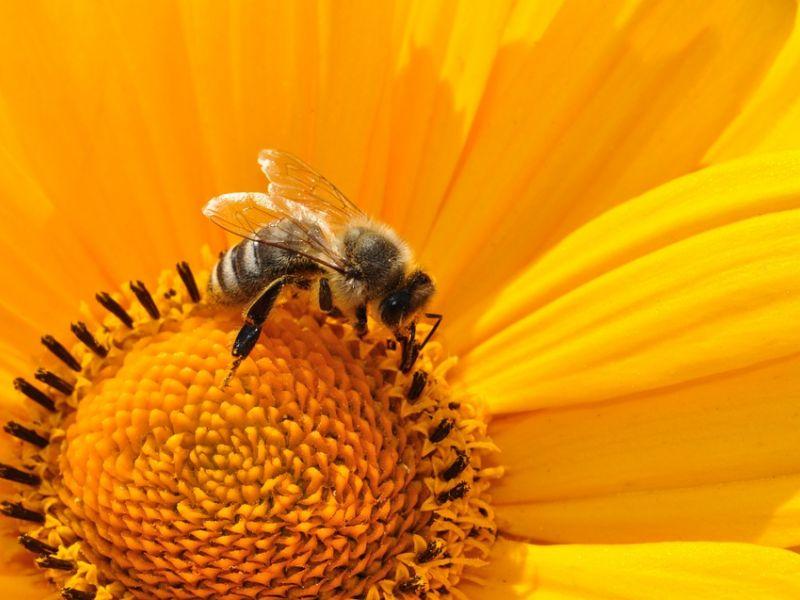 Tomaszów Mazowiecki przyjazny pszczołom! Sprawdź jakie rośliny sadzić