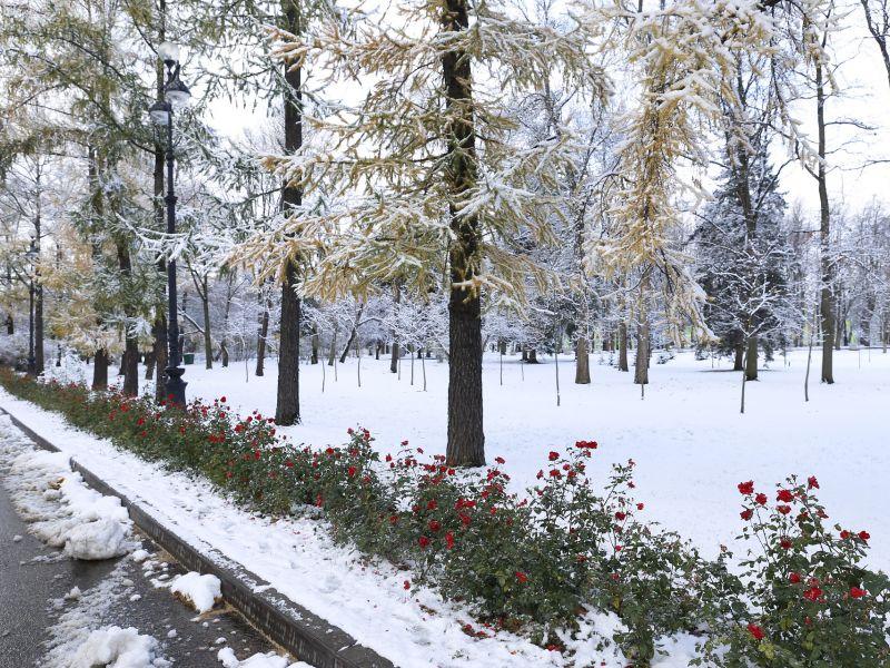 Na zdjęciu fragment drogi i parku, na drzewach przymrozek i śnieg