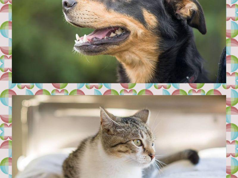 Sterylizacja suk i kotek- są jeszcze środki !