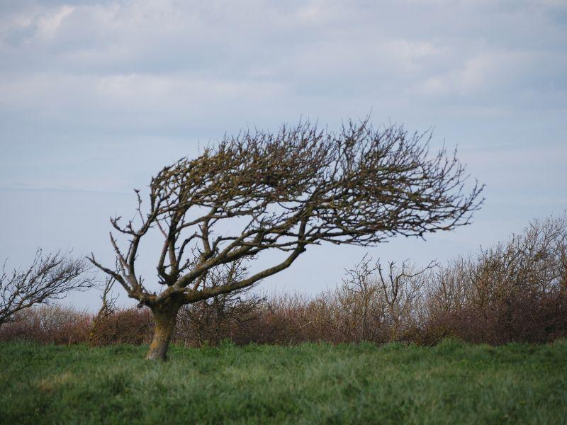 Na zdjęciu drzewo podczas wichury