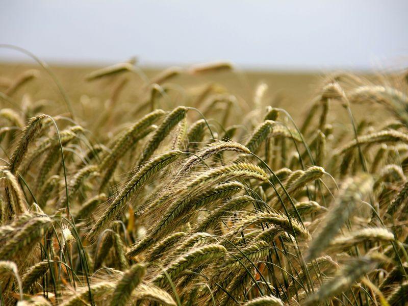 Szacowanie szkód w uprawach rolnych na terenie miasta Tomaszowa Mazowieckiego