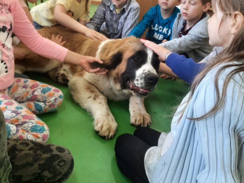 Na zdjęciu przedszkolaki podczas zajęć dogoterapii. Dzieci głaskają psa rasy moskiewski stróżujący, który leży na podłodze w sali przedszkolnej