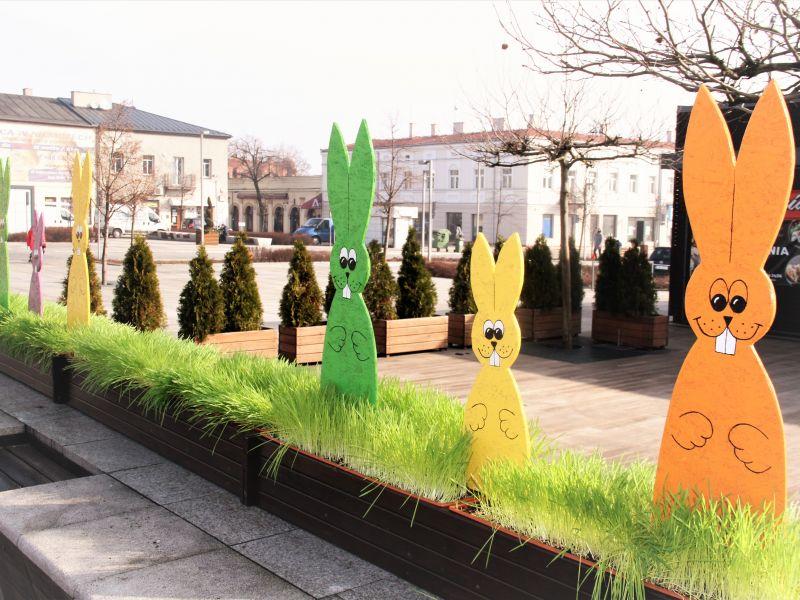 plac Kościuszki w donicach owies i kolorowe zajączki