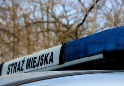 Strażnicy miejscy ujęli mężczyznę z narkotykami