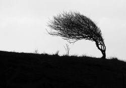 Ostrzeżenie -Silny Wiatr