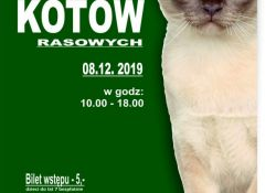 Kocia arystokracja w pałacu Ostrowskich